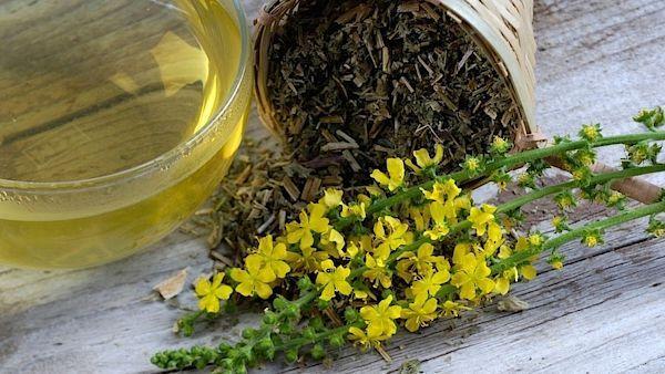 Drobné žluté květy řepíku kořenitě voní. Z rostliny se využívá hlavně kvetoucí nať, a to čerstvá i sušená.