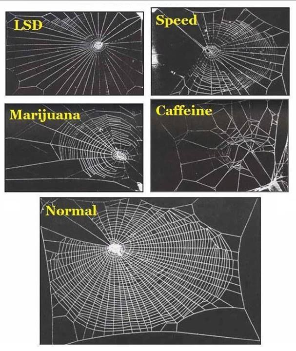 In 1995 a group of NASA scientists studied the effects of various legal & illegal drugs on house spiders, specifically on the way they weave their webs. The spider high on marijuana did an ok job weaving, but then got bored/distracted & didn't finish. The one on speed went really fast, but without much awareness of the overall picture, leaving gaps. The acid-trippy spider wove a psychedelic, symmetrical web which was very pretty but not great at catching bugs while coffee speaks for itself!