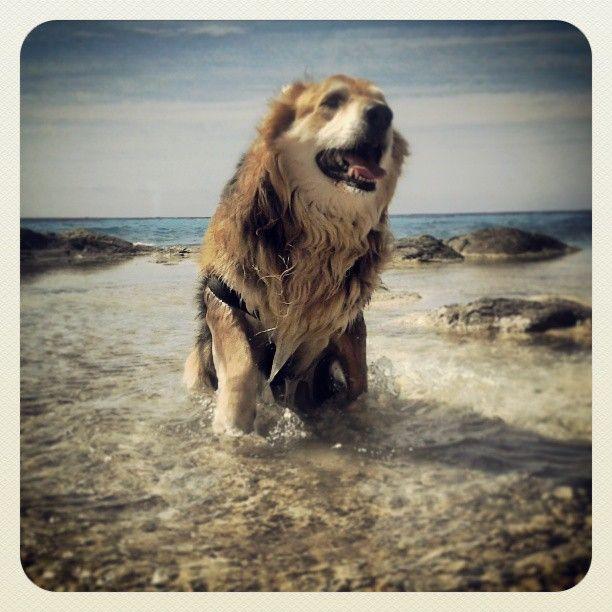 Playa para Perros en El Campello (Alicante)