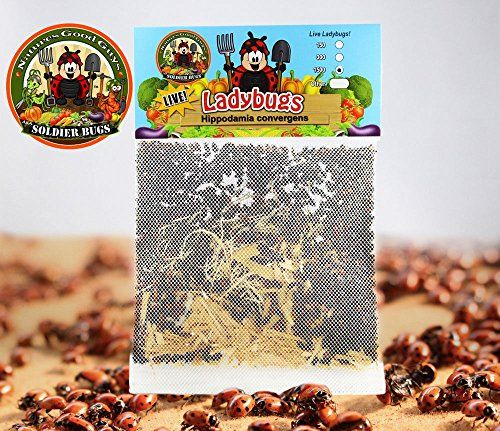 Beneficial Pest Control Insects - 1500 Live Ladybugs  Good Bugs  Ladybugs  Guaranteed Live Delivery -- Be sure to check out this awesome product. (This is an Amazon affiliate link)