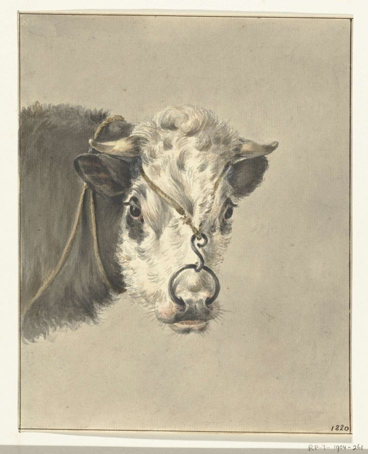 Jean Bernard | Kop van een koe, met een ring door de neus, van voren, Jean Bernard, 1820 |