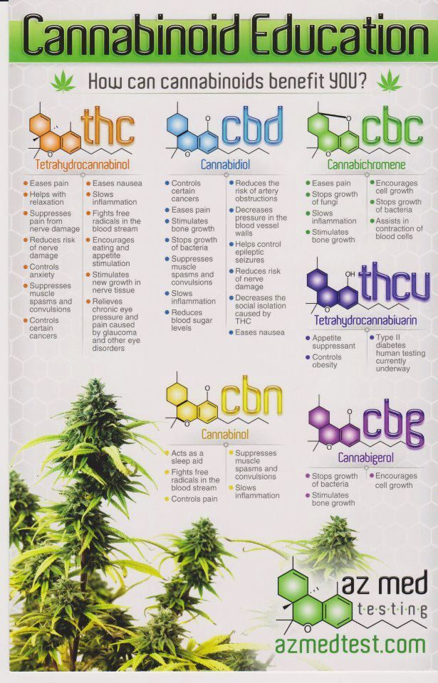 cannabinoid benefit education infographic Inside a Stoner Lab, How Cannabis is Tested for Potency (Video)