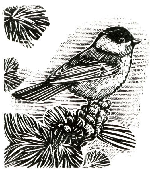 Chickadee - Wood Engraving by Kenspeckle Letterpress