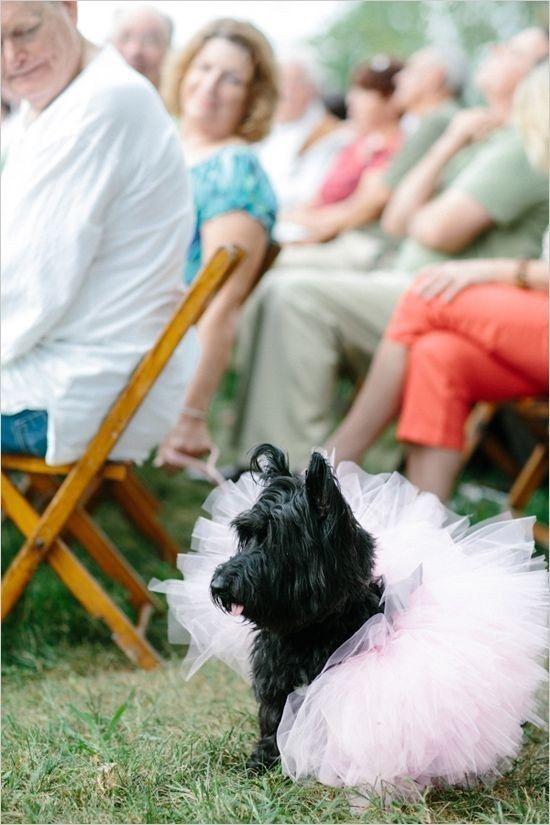 Fabulous | 12 Best Dressed Pets At Weddings