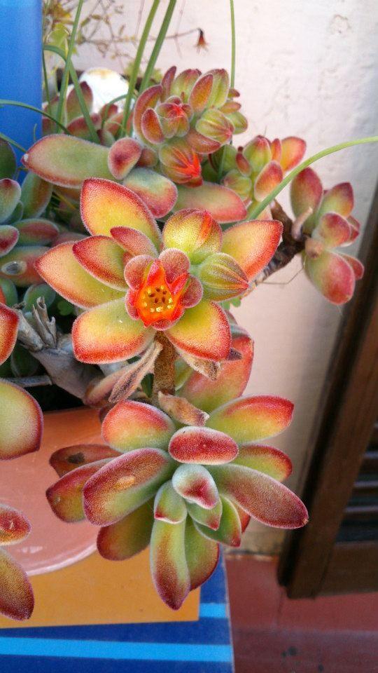 Fotografía de Roser Fúnez ganadora e la Flor de la semana del 4 de marzo de 2013