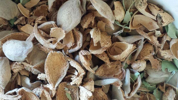 DYK? Almond hulls are sold for animal feed, most commonly dairy feed. Hulls add nutrition to the animals diet & aids in healthy milk production. https://svalmonds.com/products-2.html