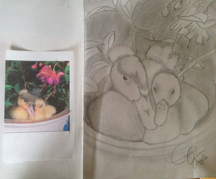 Ducks in a pot pencil drawing. Shading. Done at a free Michaels class and finished at home. ☺️