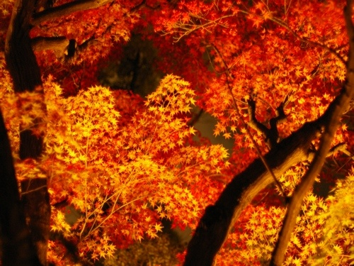 紅葉 大阪 #Osaka #Japan #autumn leaves Osaka Japan autumn leaves