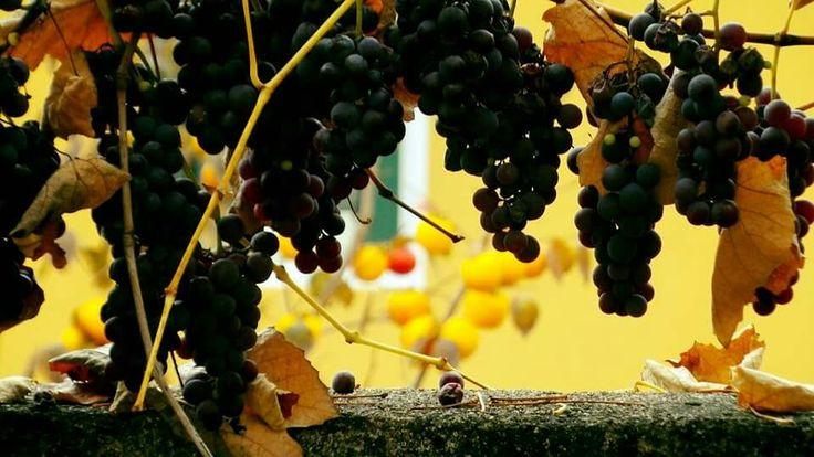 L'odore e il colore dell'autunno a Udine by Andrea Piccinato