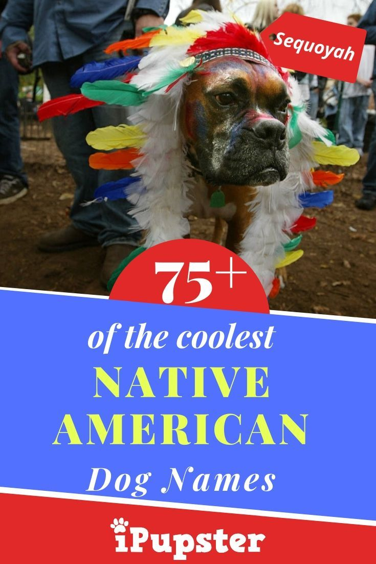 The Top 75 Cool Native American Dog Names In 2020 Dog Names Native American Dog American Dog