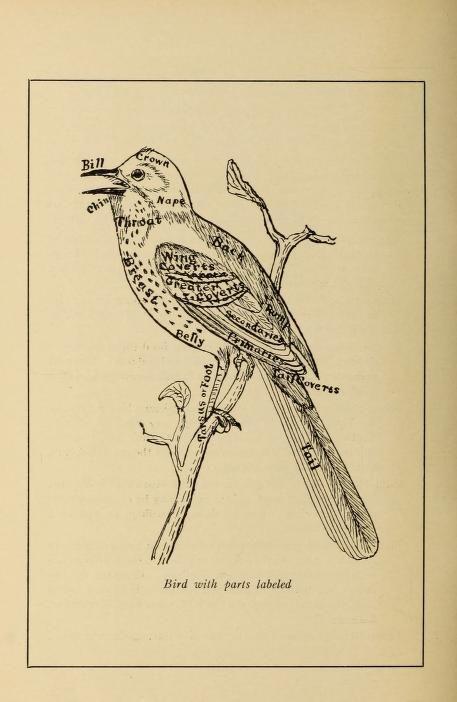 A Manual Of Bird Study Description Twenty Five Local Birds With
