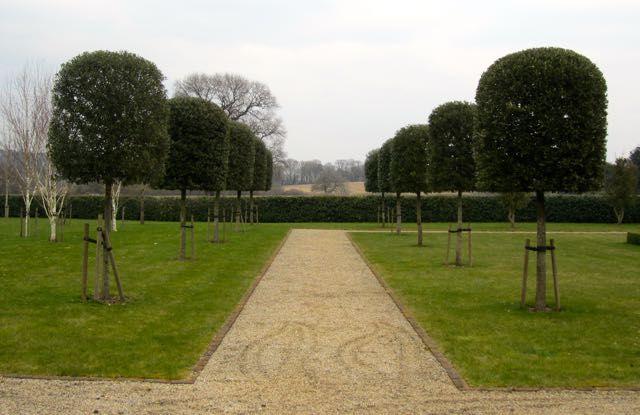 Quercus ilex lining a pathway