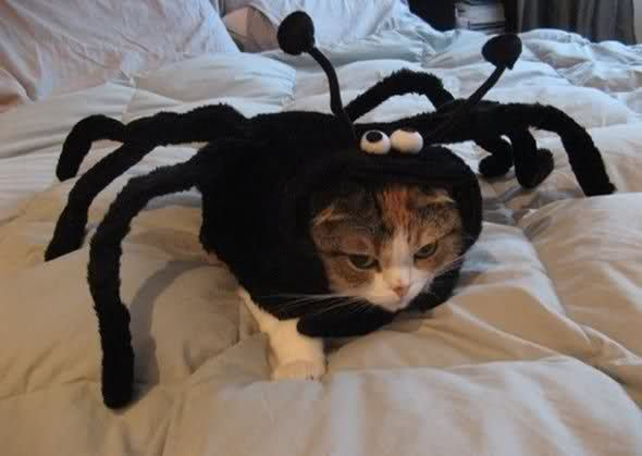 They told me I could become anything, So I became a spider.Funny Pets, Dresses Up, Halloween Costumes, Hilarious Animal, Cat Costumes, Kitty Humor, Pets Costumes, Baby Cat, The Avengers