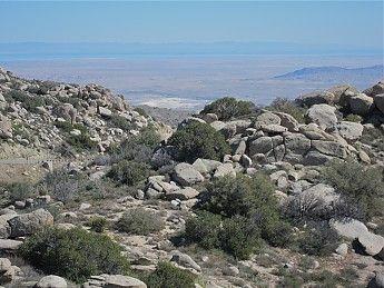 DOING MR. VELVET-Anza-Borrego Desert