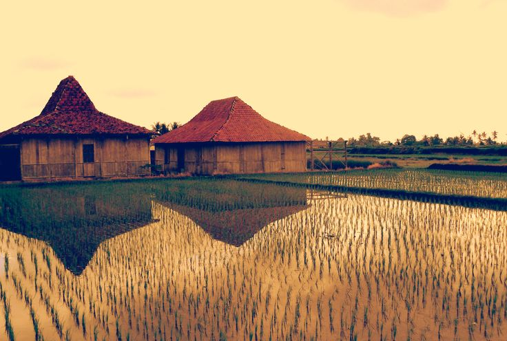 Traditionals houses on rices fields, Ubud. Bali.