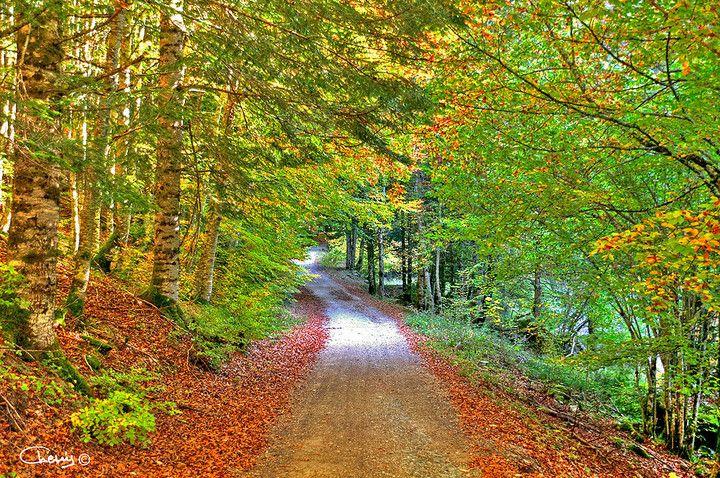 Este también es un bonito paraje para pasear. ¿Lo conocéis? Es la Selva de Irati en el Pirineo de Navarra :) www.xtremonline.com