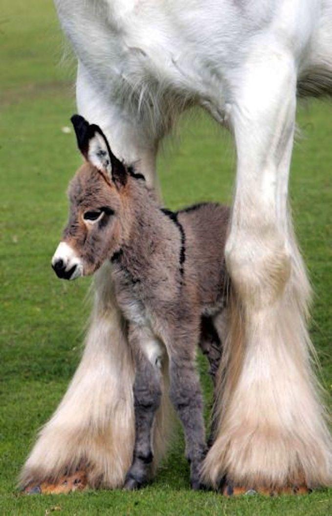 Baby Donkey's hiding place