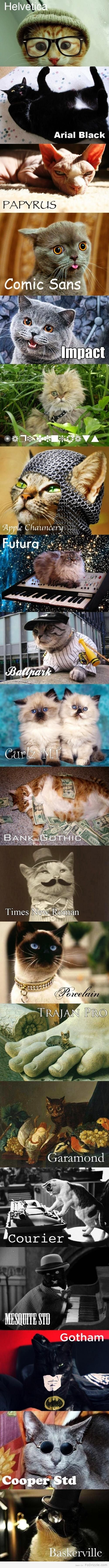 30 best Kittehs! images on Pinterest   Funny cats, Funny kitties and ...
