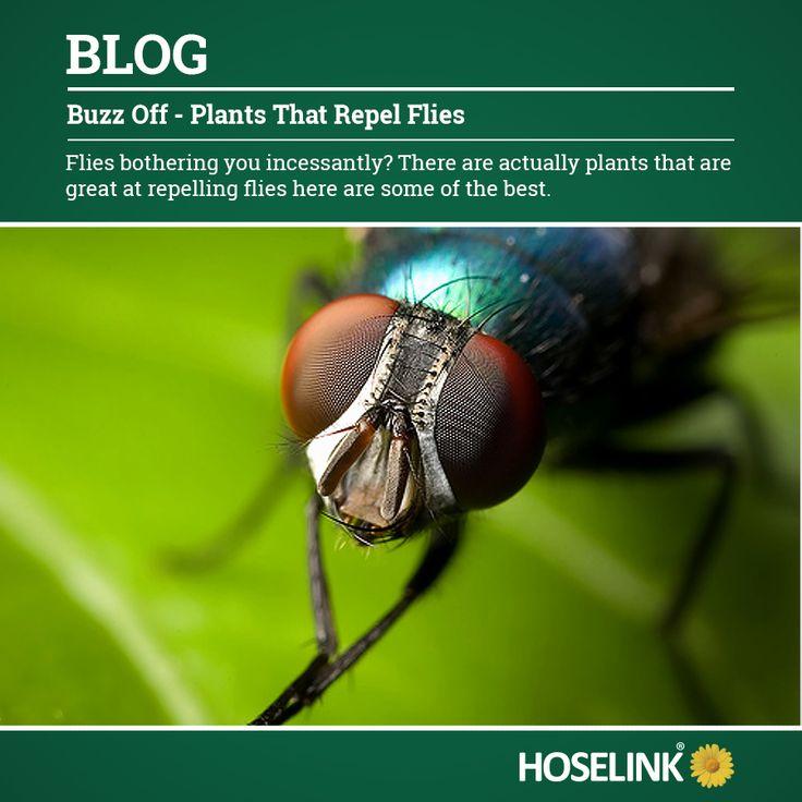 https://www.hoselink.com.au/blog/buzz-off-plants-that-repel-flies/ A collection of plants that repel flies