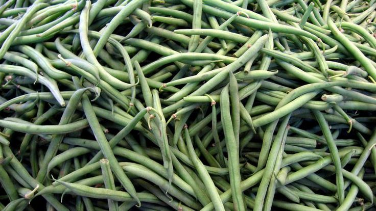 """From Pickles to """"Leather Britches"""" - How to Preserve Green Beans"""