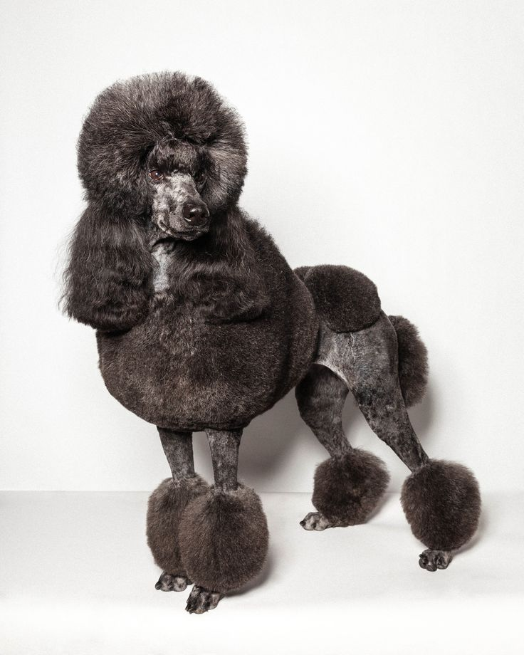 These Pictures Prove The World Of Top Dog Grooming Is