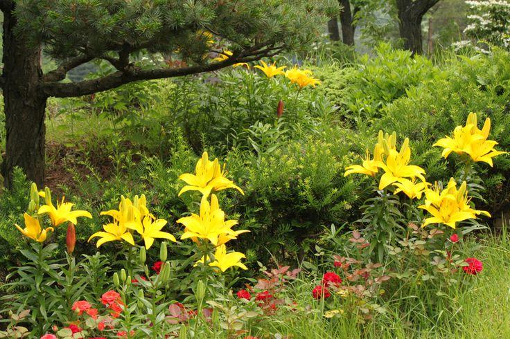 자수화단..꽃으로 자수를 놓은 듯한 화단이라는 뜻인데요. 화단의 아름다운 색채 때문에 드라마 사랑비에서도 로맨틱한 장면에서 활용된 장소인 만큼 화담숲 방문객에게도 최고의 포토존입니다