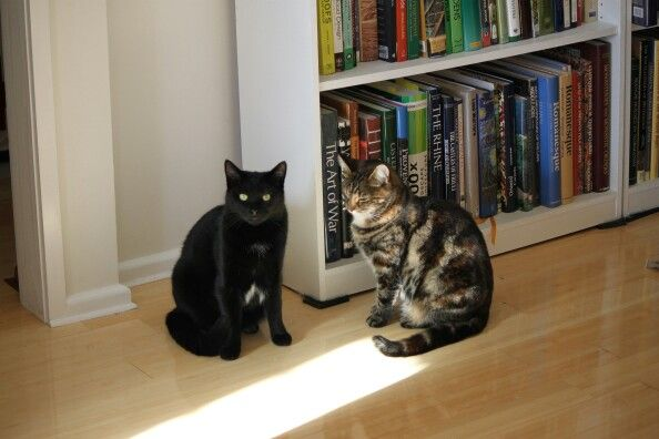 Sooty and Tiger