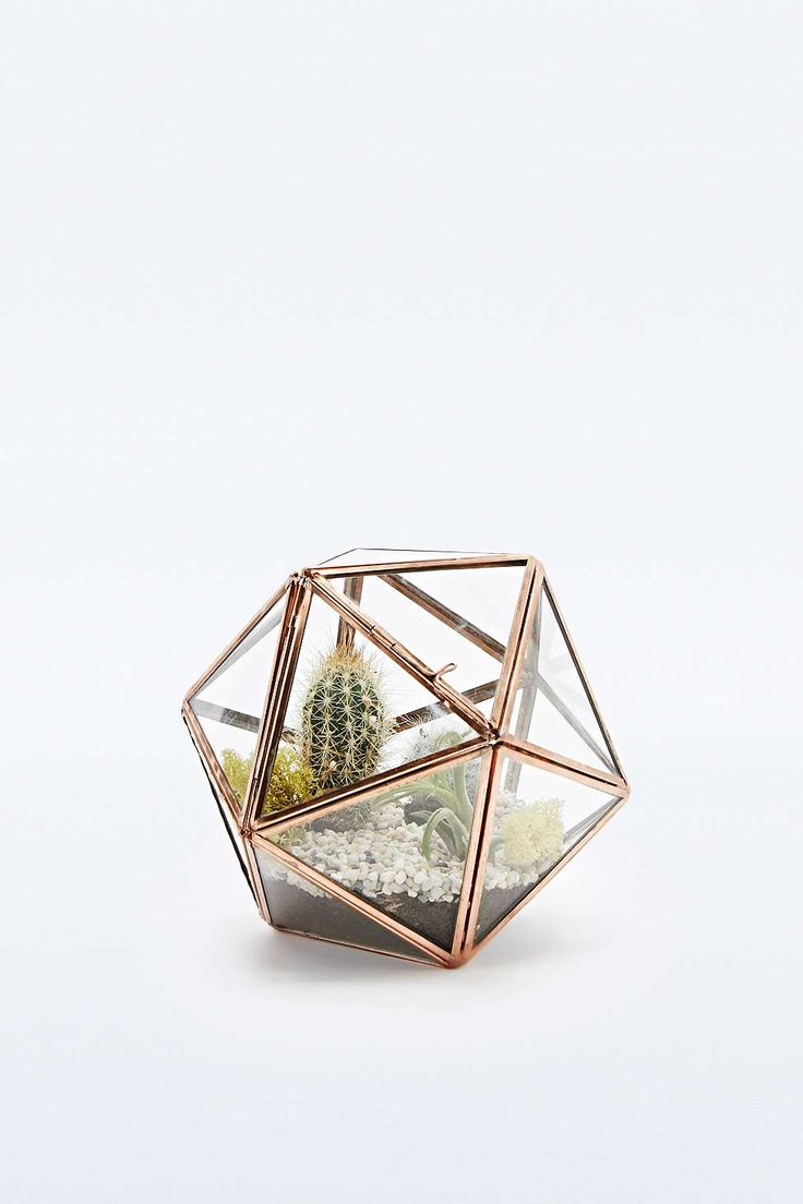 Bring a terrarium instead of traditional flowers, more original and easier to keep alive.