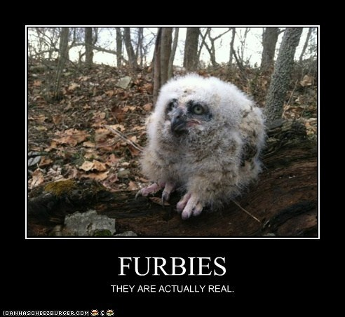 Funny Pictures With Captions Clean With Animals 200+ best Funny...