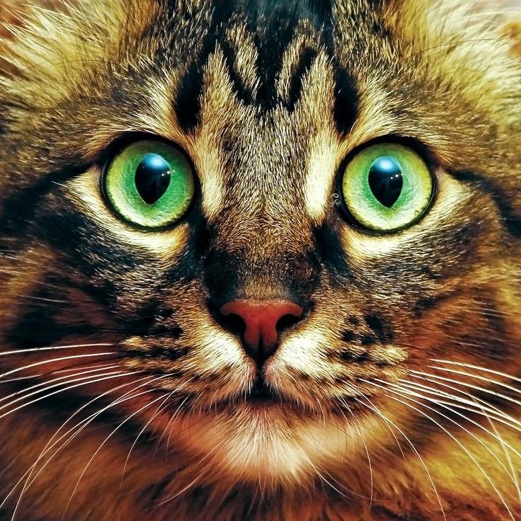 my own male cat KARPUZ; 4 years old <3