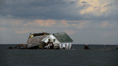 The last house on Holland Island in Chesapeake Bay, which once had a population of almost 400, finally toppled in October 2010. As the water rose and the island eroded, it had to be abandoned. The Flood Next Time | New York Times