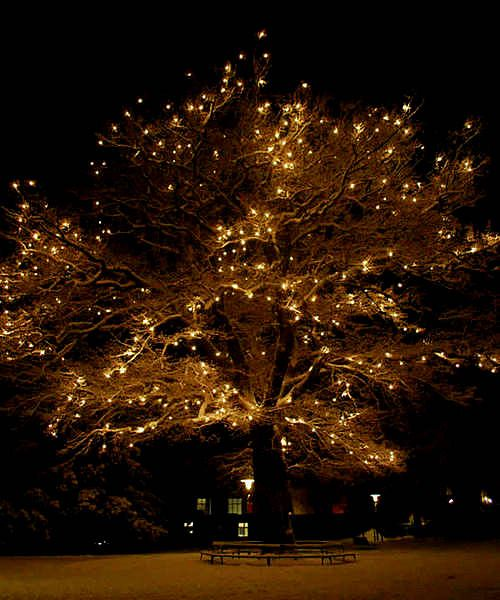 Magical Dreamy Whimsical Tree   I Want One In My Back Garden! Design Inspirations