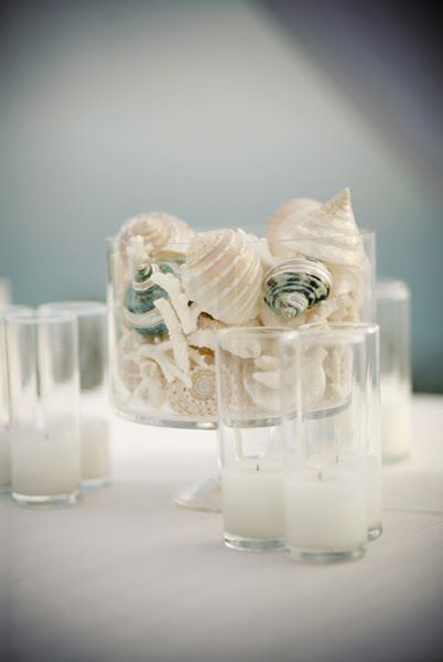 Best images about shells and coral on pinterest