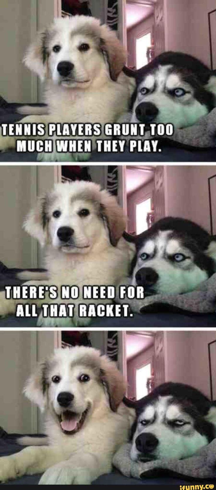 dog, pun, funny, joke                                                                                                                                                                                 More