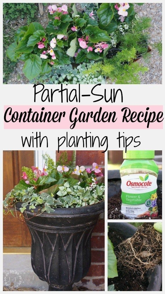 6 Step Recipe For Partial Sun Container Garden Plus Planting Tips Lost Found Container Plants Container Gardening Container Herb Garden
