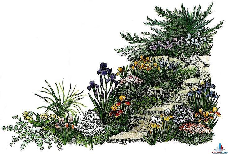 1. Juniperus sabina f. tamariscifolia. 2. Sedum sieboldii. 3.Sedum acre. 4. Ирис карликовый (сорта) — Iris pumila. 5. Iris х hybrida. 6. Примула ушковая — Primula auricula. 7. Иберис вечнозеленый — Iberis sempervirens. 8. Луговик дернистый — Descliampsia cespitosa. 9. Молодило гибридное — Sempervivum х hybridum. 10. Камнеломка дернистая — Saxifraga caespitosa. 11. Мускари хохолковый — Muscari comosum. 12. Колокольчик ложечницелистный — Campanula coclileariifolia.