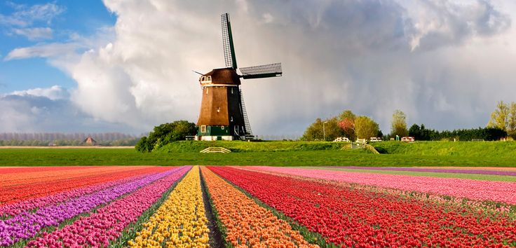 Unos 25 kilómetros, aproximadamente, de tulipanes de todos los colores se extienden en el sudeste de Amsterdam (Holanda) y el mes de abril es el mejor para ver la explosión de color. Impresionante