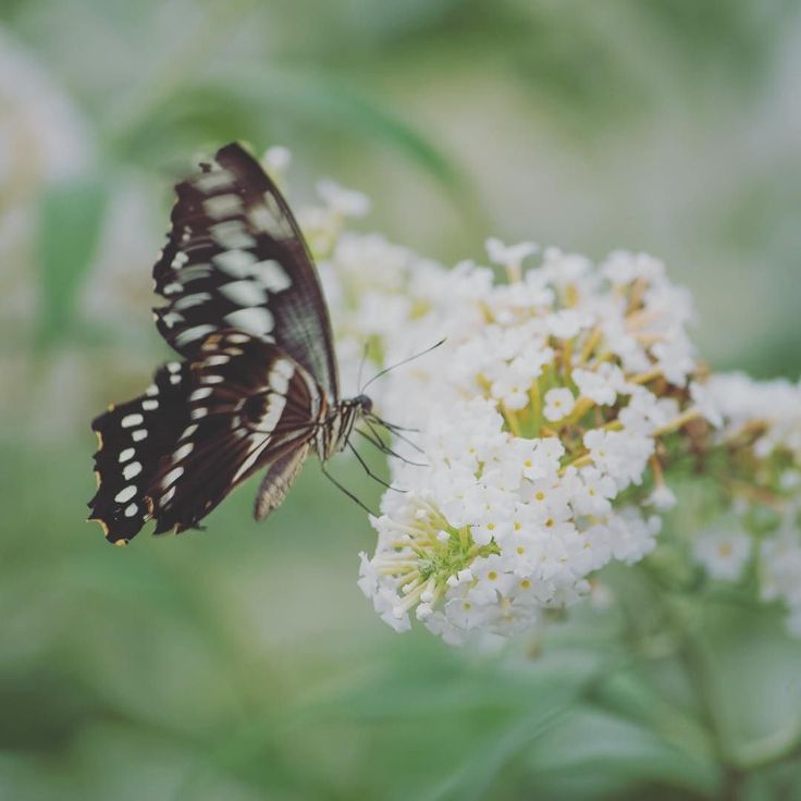 Seeing butterflies in the garden always makes me smile. We have a buddleia that has sprung up out of nowhere that they love! This particular butterfly was in a butterfly house  more reliably warm than an English garden! . . . . #butterflytuesdays #nature #butterfly #wildlife #outdoorliving #simplelife #getoutdoors #thegreatoutdoors #itsamazingoutthere #OptOutside #outdoorliving #ourplanetdaily#outsideculture #theartofslowliving #nothingisordinary #littlestoriesofmylife #livethelittlethings…