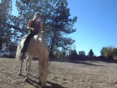 Bridleless How to Teach Your Horse to back up and Stop while Riding with Troiya