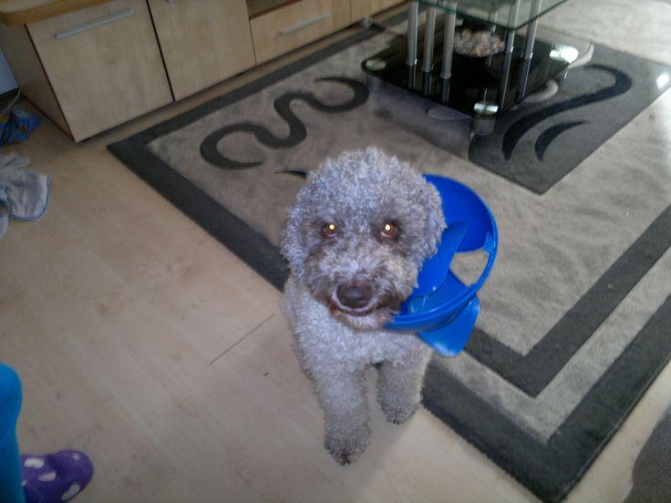 BILLY,  My darling dog
