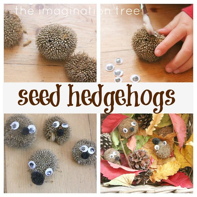 how to make an autumn seed hedgehog from http://theimaginationtree.com