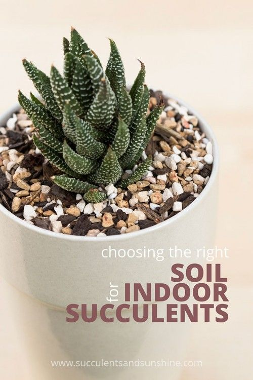 Having the right soil is crucial for succulents! Learn how to make your own great soil (and where to buy some)