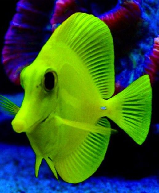 1001 best images about under the sea 2 on pinterest red for Fish under the sea