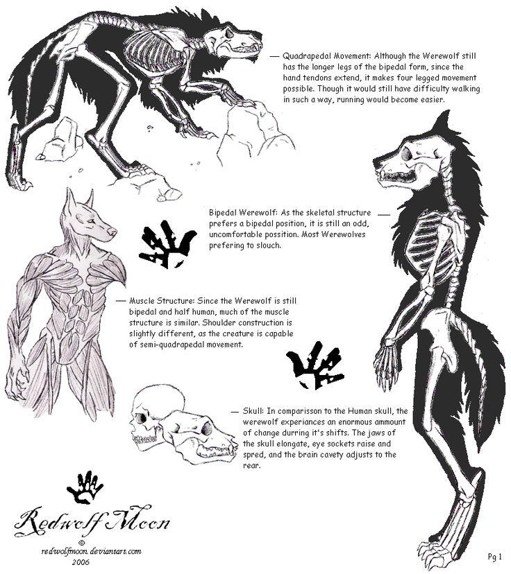 Lycan Anatomy01 by RedWolfmoon on DeviantArt