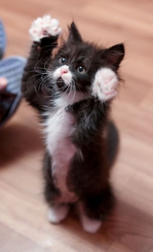 """Stick'em Up / """"But I didn't steal the ball of yarn."""""""