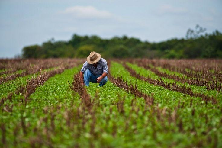 IMPORTANCIA DE LA AGRICULTURA EN MÉXICO. La #Agricultura en #México es considerada como una de las actividades económicas con mayor relevancia ya que genera gran cantidad de empleos en el país; es considerada como el sector productivo más importante desde un punto vista económico, social y ambiental, ya que de ésta depende la alimentación primaria de millones de personas... Lee más dando click en la imagen.