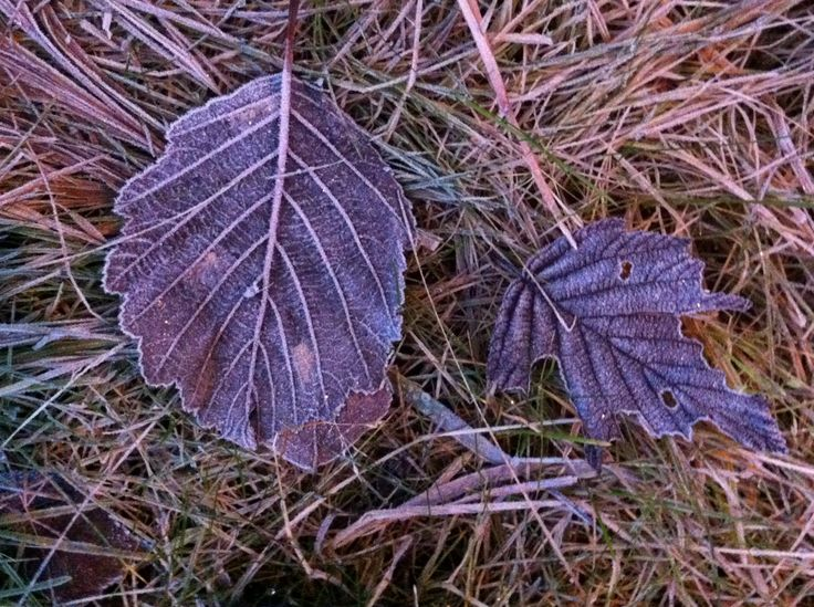 Day 76 - Autumn leaves frozen