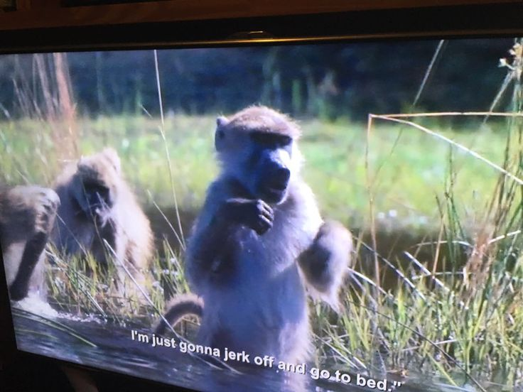 We've seen glitches on Netflix before, but this BBC nature documentary seems to have been given the subtitles of a stand up show from Parks and Recreation's Aziz Ansari. It makes for quite the combination.