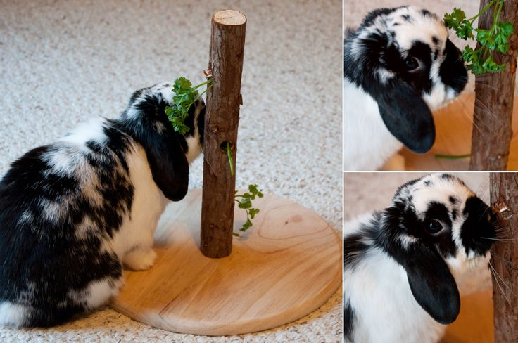 Leuk om je konijn eens op een andere manier groente aan te bieden. Ook gemakkelijk zelf te maken met een boomstam! (Let op! Gebruik wel een boomstam die konijnen mogen eten ;) )