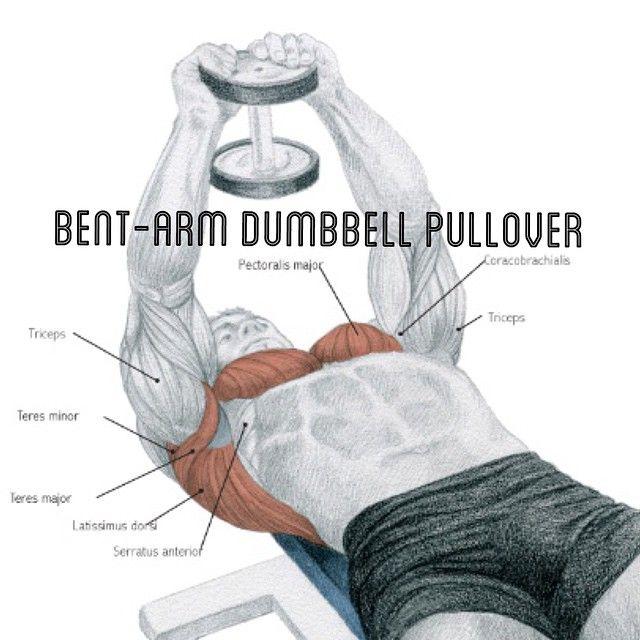 #fitnesscardioworkouts. #MuscleUses Main Muscle: Latissimus dorsi, teres, pectoralis major. Secondary Muscles: Serratus anterior, coracobeachialis, triceps, rhomboids. Antagonists: Pectoralis major, deltoid (front), triceps.